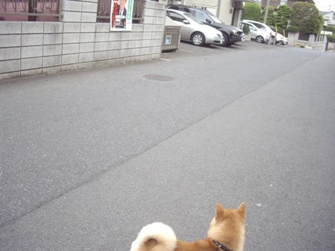 柴犬ズン画像051501