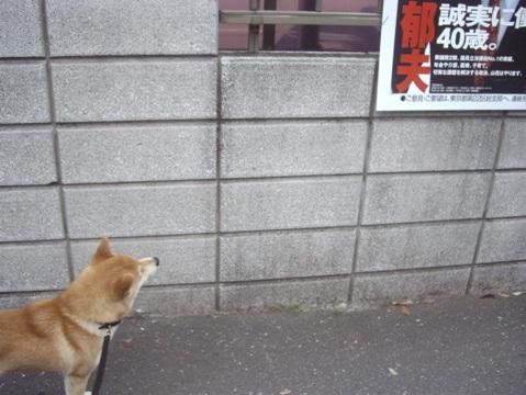 柴犬ズン画像051512