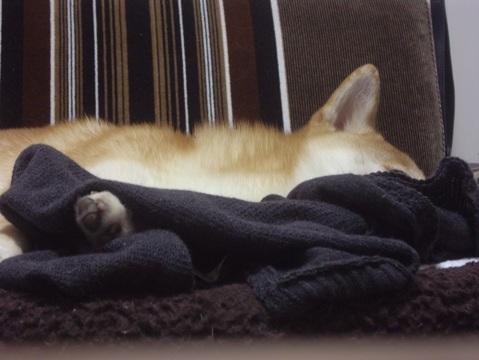 柴犬ズン画像051818