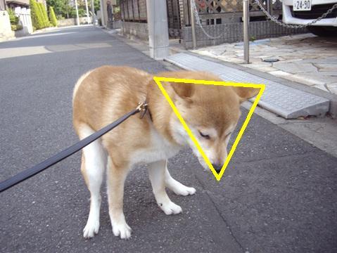 柴犬ズン画像052201