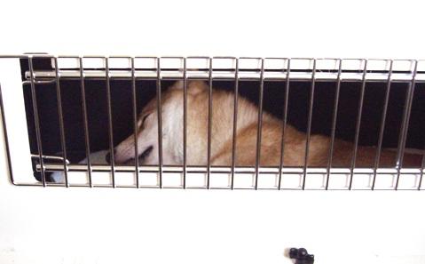 柴犬ズン画像052301