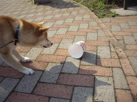 柴犬ズン画像052602