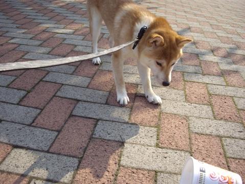 柴犬ズン画像052603