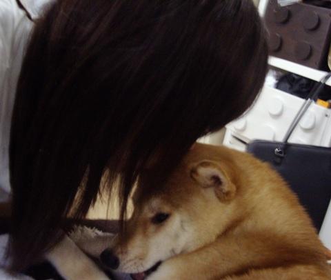柴犬ズン画像053105