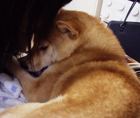 柴犬ズン画像053107
