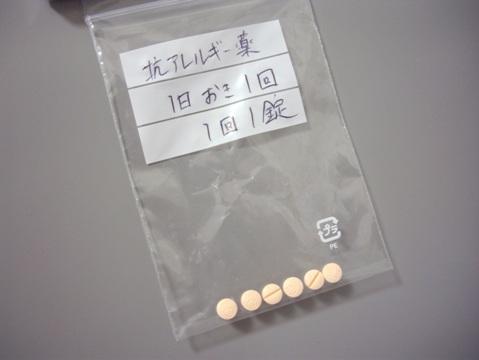 柴犬ズン画像061708