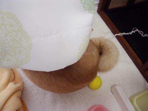 柴犬ズン画像062003