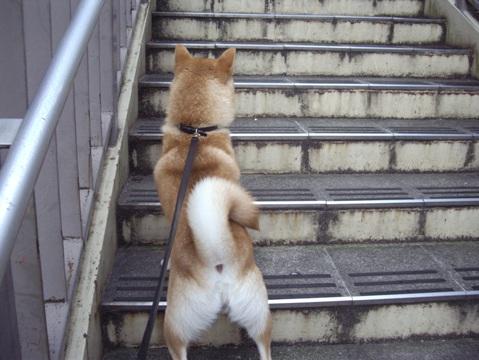 柴犬ズン画像062102