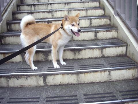柴犬ズン画像062101