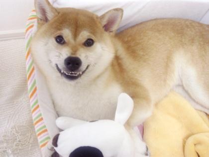 柴犬ズン画像062706
