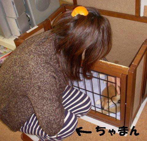 柴犬ズン画像063010
