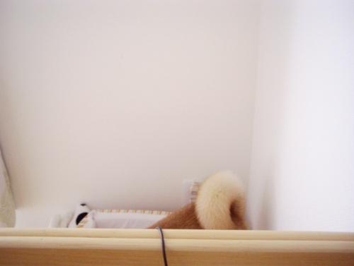柴犬ズン画像070201