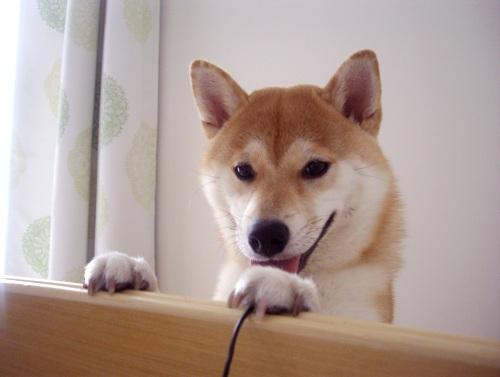 柴犬ズン画像070202