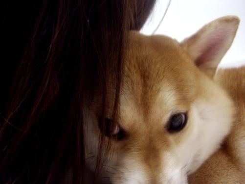 柴犬ズン画像072202
