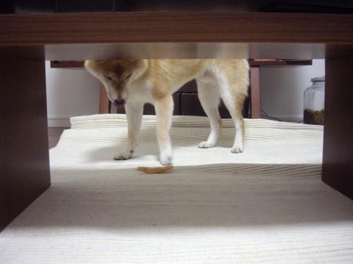 柴犬ズン画像072501