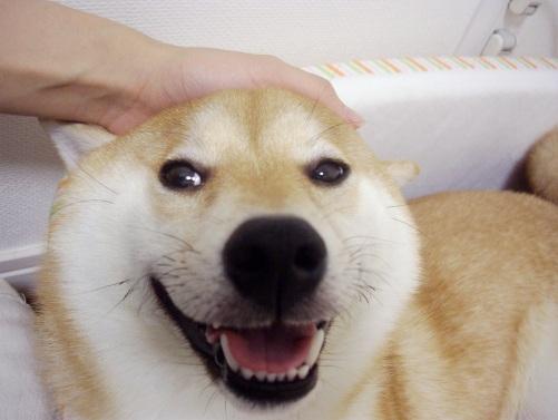 柴犬ズン画像072707