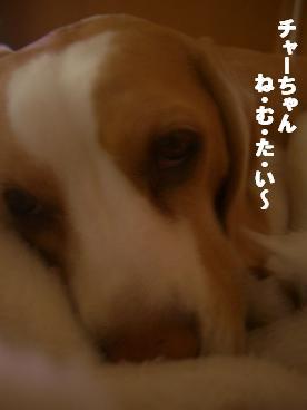 CIMG3233.jpg
