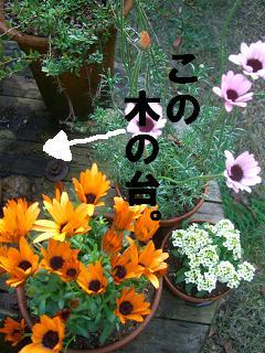 CIMG3366.jpg