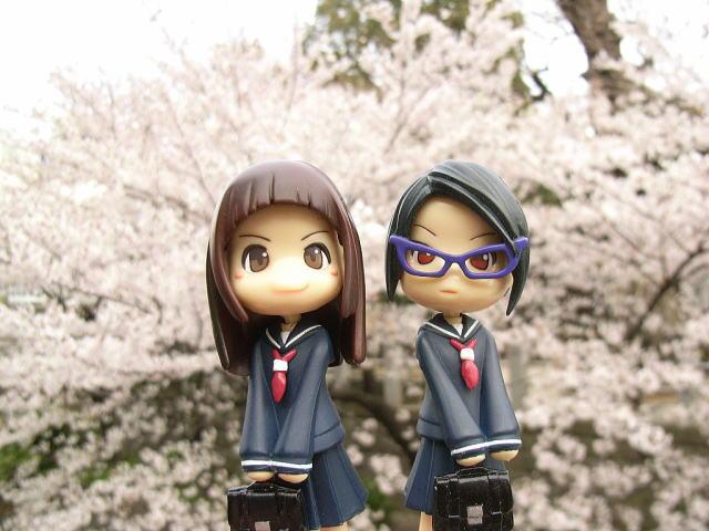 櫻花とPinky:st.08-003