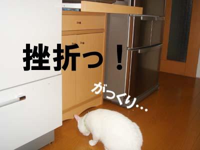 cat240