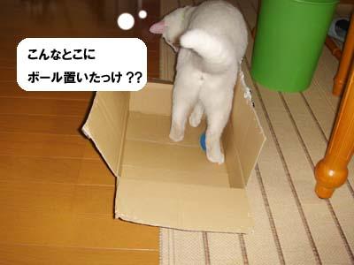 cat244