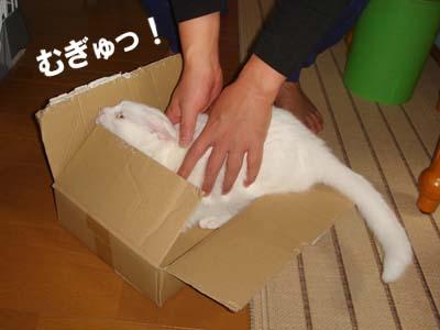 cat245