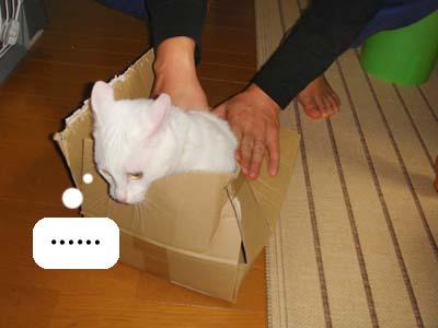 cat246