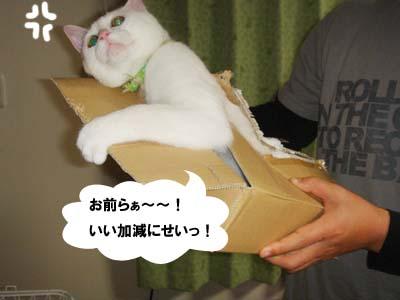 cat248