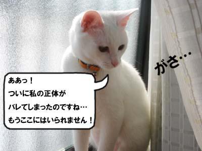 cat253