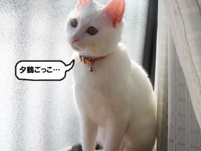 cat254