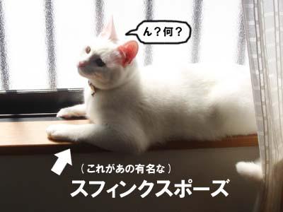 cat256