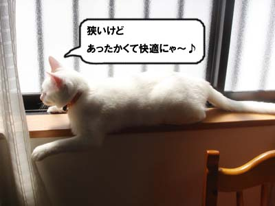 cat257