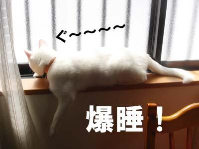 cat258