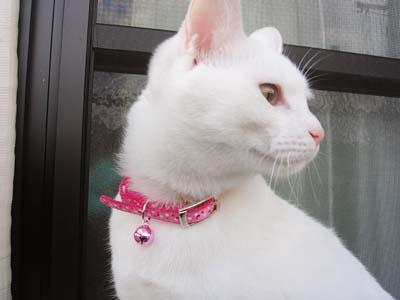 cat263