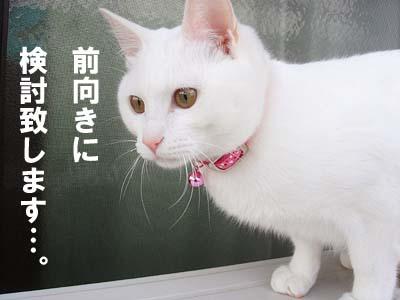 cat264