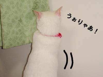 cat268