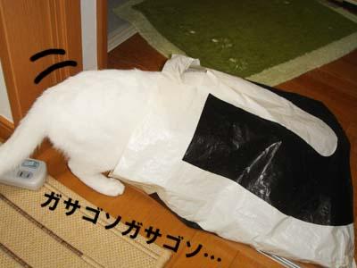 cat269