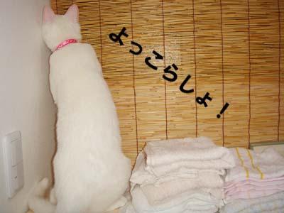 cat273