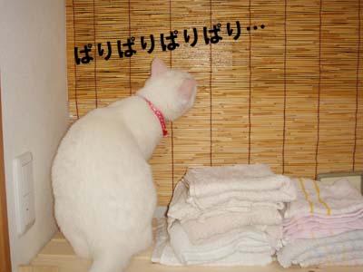 cat275