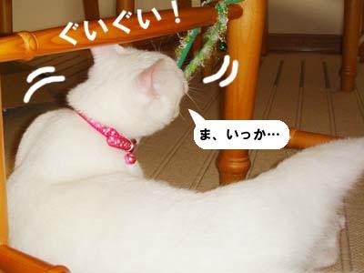 cat278
