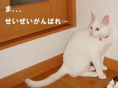 cat279