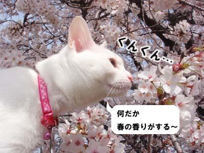 cat281
