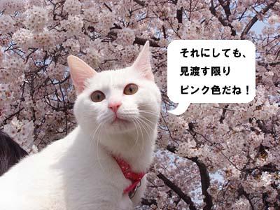 cat282