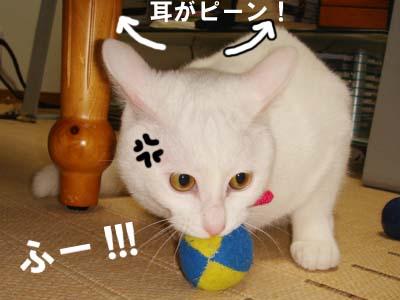 cat287