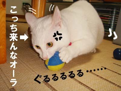 cat288