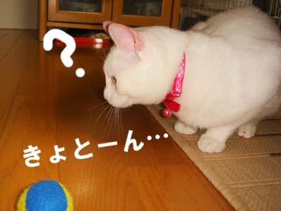 cat289