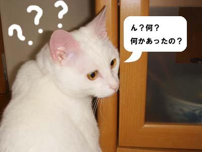 cat290