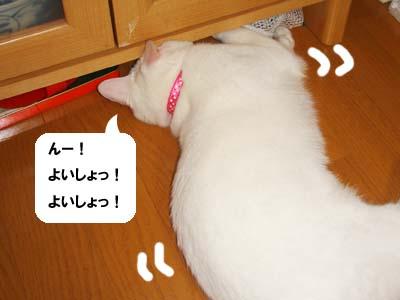 cat292