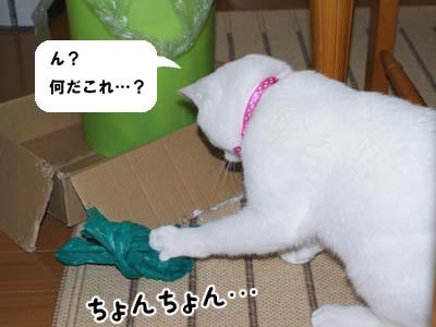 cat304