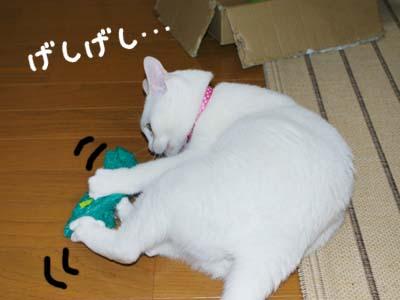 cat306
